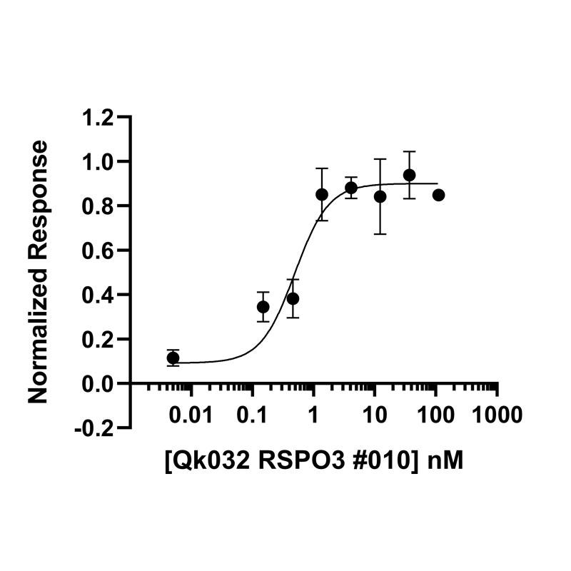 Recombinant R-spondin-3 protein bioactivity in Wnt-3 TOP-FLASH reporter assay