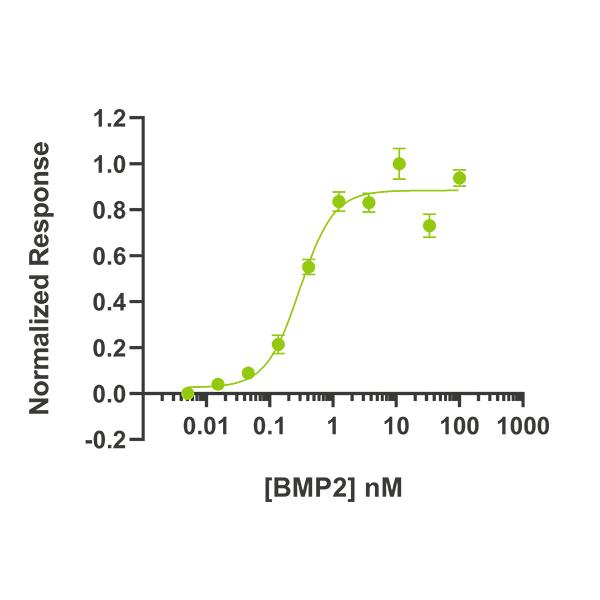 Human BMP2 Qk007 protein bioactivity lot #010