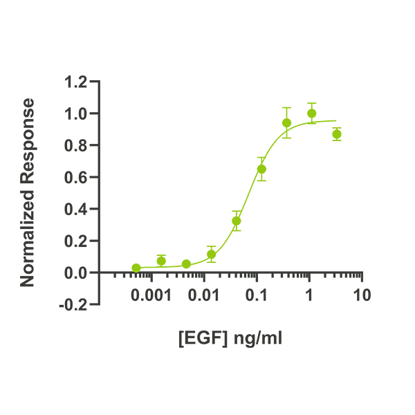 Human EGF Qk011 protein bioactivity lot #011