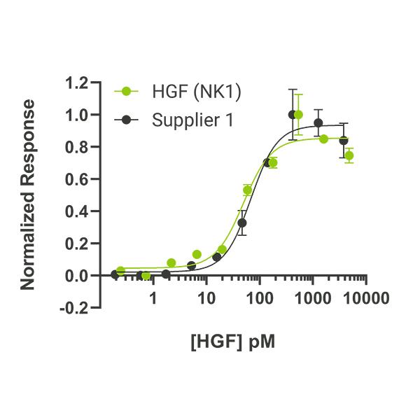 Human HGF NK1 Qk13 protein bioactivity lot #010