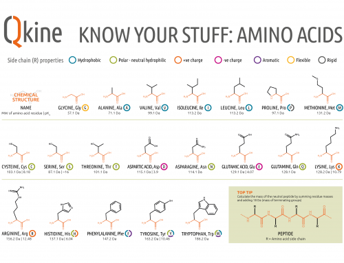 Infographic: Amino Acid chemical structures and side chain properties
