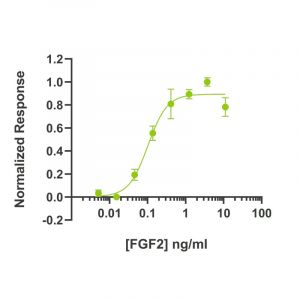 Recombinant FGF2 / bFGF bioactivity in luciferase reporter assay