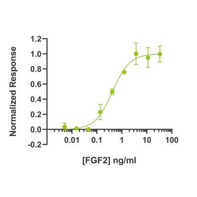 Zebrafish FGF2 / bFGF Qk002 protein bioactivity lot #011