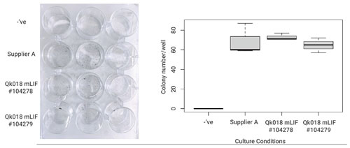 Qk018 mouse LIF protein supports mouse ES cell propagation