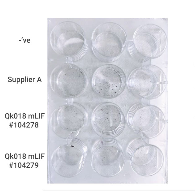 Mouse LIF in embryonic stem cell colony formation assay