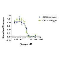 Noggin activity is determined using inhibition of BMP2 activity measured in a BMP-2 responsive firefly luciferase reporter in HEK293T cells. EC50 = 1.3 nM