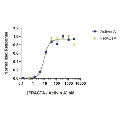 Wild type and follistatin resistant Activin have equivalent bioactivity
