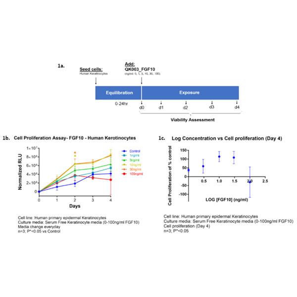 FGF-10 bioactivity