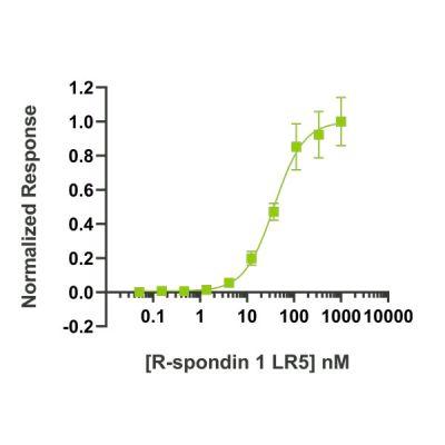 Human R-spondin 1 LR5 Qk031 protein bioactivity lot #104286